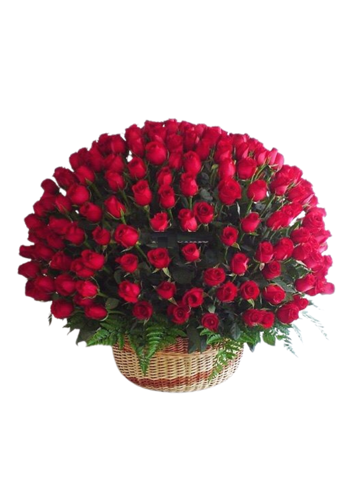 Extreme Red Roses Basket